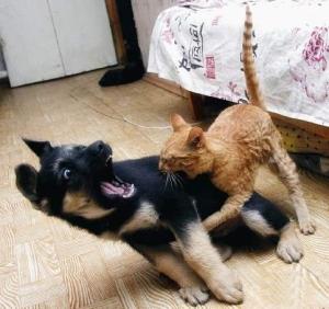 L-a muşcat pisica!